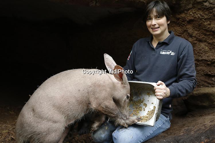 Foto: VidiPhoto<br /> <br /> ARNHEM - Portret van Constanze Mager, hoofd educatie van Burgers' Zoo in Arnhem, tussen de aardvarkens. Burgers' Zoo is de enige dierentuin in ons land met aardvarkens.