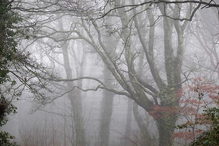 Trees in a misty park in winter