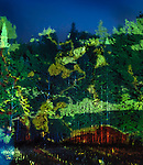 Abstract colorful light projection on green trees, beautiful abstract night nature scenery