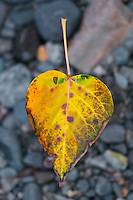 A yellow leaf suspended over rocks.