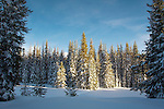 Sun setting on trees and a snow covered meadow in the Lolo National Forest in Montana