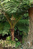 Plant History Glasshouse (formerly Australian Glasshouse), 1830s, Rohault de Fleury, Jardin des Plantes, Museum National d'Histoire Naturelle, Paris, France. Detail of cyatheales plants.