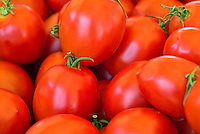 Red Roma Tomatoes Green Stem