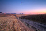 Washington, Eastern, Palouse Region, Tekoa.  A crop access road cuts through the rolling hills of the Palouse, with partial moon at dusk.