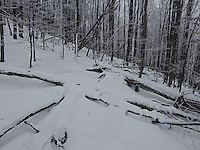 FOREST_LOCATION_90172