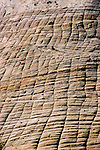 Zion National Park, Utah, UT, closeup of Checkerboard Mesa rock formation, landform, Southwest America, American Southwest, US, United States, Image ut377-17653, Photo copyright: Lee Foster, www.fostertravel.com, lee@fostertravel.com, 510-549-2202