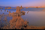 Sunset on Mono Lake's Reeds and Tufa in California's Eastern Sierra