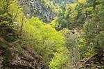 Spring view down Tallulah Gorge