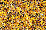 South America, Bolivia, La Paz. Dried yellow flowers from the Witch Doctor's Market of La Paz.