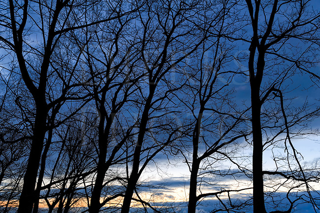 Cold evening sky with black silhouetted tree limbs and a streak of white amongst the cold deep blue.