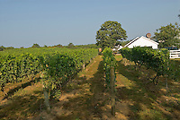 Massachusetts, Truro, Truro Vineyards, Cape Cod