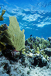 Underwater scene off the coast of Pinar del Río Province, Cuba