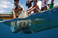 A big hawksbill sea turtle (Eretmochelys imbricata) being released back to the wild. It was great seeing it swim away