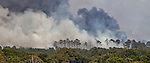 A line of pine trees goes up in flames in Grimes County, Texas east of Whitehall on June 20, 2011.  The Dyer Mill fire consumed more than 4000 acres and 30 homes in the first 24 hours.