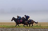 Jockeys riding racehorses on gallops in the Cotswolds, Swinbrook, Oxfordshire, UK