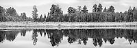 Native forest at Lake Matheson, Westland Tai Poutini National Park, UNESCO World Heritage Area, West Coast, New Zealand, NZ