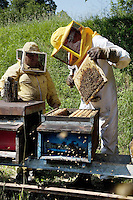 Switzerland 2012. Ticino. Beekeeper, honey and organic farming.
