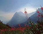 Glacier Mountains and fireweed flowers in smokey fog Glacier National Park, Montana, USA