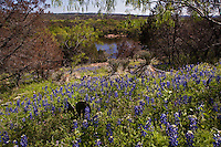 Texas Hill Country Wildflower Bluebonnet landscape along the pink granite rocks of Inks Lake State Park
