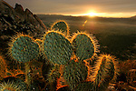 The needles of a cactus seem to glow as the sun sets on Ryan Mountain Trail inside Joshua Tree National Park on Wednesday, November 9, 2005.
