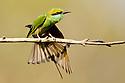 India & Asia: Birds