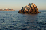 Ship Rock, Catalina Island, Channel Islands, California; Ship Rock at sunrise, viewed from the bow of the dive boat