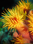 Kenting, Taiwan -- Close-up of coral polyps.<br />