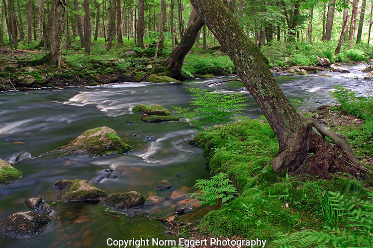 Rushing water in Lawrence Brook in Royalston, MA
