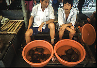 venditori di tartarughe <br /> sellers of turtles