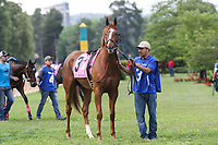 HOT SPRINGS, AR - April 14: Stellar Wind #3 stands in the infield paddock prior to the Apple Blossom Handicap at Oaklawn Park on April 14, 2017 in Hot Springs, AR. (Photo by Ciara Bowen/Eclipse Sportswire/Getty Images)