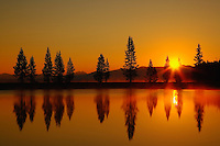 Sunrise and silhouetted Lodgepole pine trees (Pinus contorta), Yellowstone National Park, Wyoming, USA.