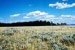 Wyoming: Yellowstone National Park.  Meadow and lodgepole pine forest.  Photo #: wyyell105..Photo copyright Lee Foster, www.fostertravel.com, 510/549-2202, lee@fostertravel.com, .