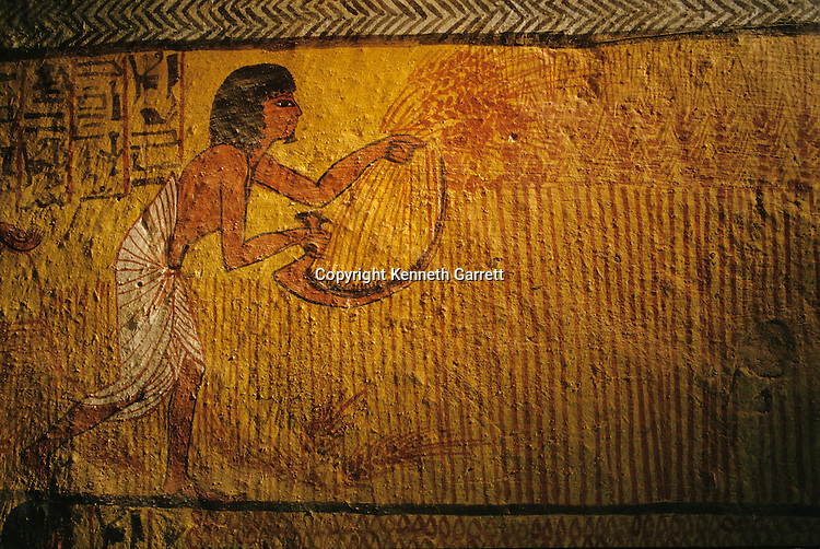 Painting of wheat reaping, Tomb of Sennedjem, Deir el Medina,Tutankhamun and the Golden Age of the Pharaohs, Page 112-113