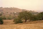 Oak Trees on golden hillside near Hollister, California