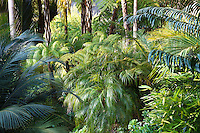 Lacy foliage Phoenix roebelenii (Pygmy Date Palm or Miniature Date Palm) and Cycads under tree ferns in California garden