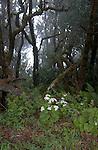 ,Prehistoric forest in the Parque nacional de Garajonay, Unesco world heritage site. La Gomera, Canary Islands.