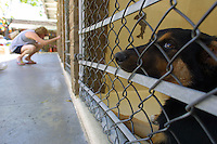 Dog at Humane Society shelter in San Diego May 5, 2001.