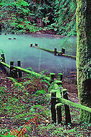 Fine art landscape of flooded path in Armstrong Redwoods State Park, with strong brilliant greens of forest ferns and redwood fronds and moss, with path bordered by zig-zagging split-rail wooden fences, also coated with green moss, and redwood trees reflecting in the pool of water submerging the path and railings.
