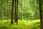 Summer Forests