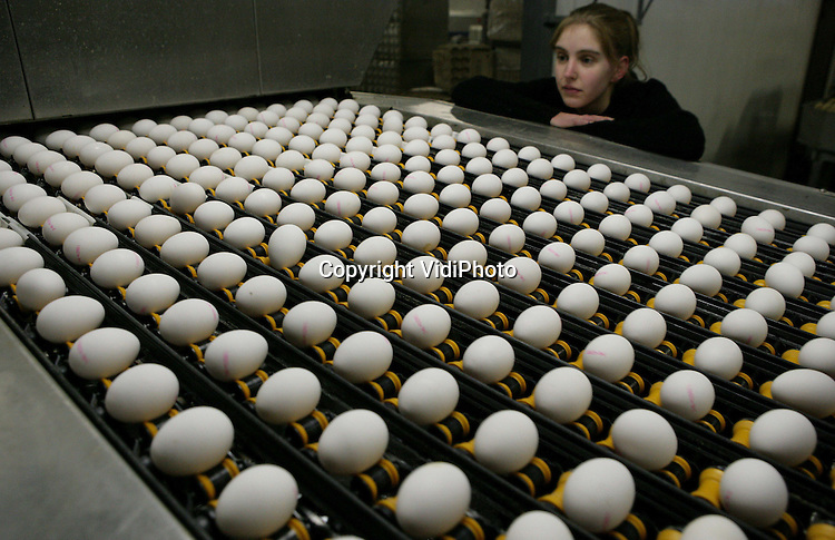 """Foto: VidiPhoto..BARNEVELD - Bij het eier-inpakstation Kwetters in Barneveld worden donderdag 150.000 witte eitjes gesorteerd en ingepakt voor de Nederlandse voedselbanken. De gratis kersteieren zijn geschonken door de Nederlandse pluimveehouders (Nederlandse Vakbond Pluimveehouders, NPV). Het grootste eier-inpakstation van Nederland, Kwetters, stelt -eveneens gratis- personeel en machines beschikbaar om de eieren in de pakken in doorzichtige doosjes van tien stuks met de tekst: """"NVP maatschappelijk betrokken"""". Maandag worden de eieren naar de voedselbankcentrale in Rotterdam gebracht."""