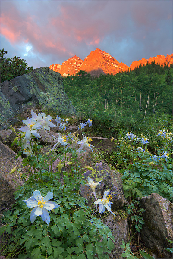 I did not think I'd have much color in the sky on this morning. But when the clouds lit up at the Maroon Bells, I found myself between Maroon Lake and Crater Lake, I quickly rushed to find a decent compostion. Fortunately, just around the bend on the dirt trail I found a patch of Columbine, Colorado's state wildflower. This little group of blue and whilte natives gave me just the foreground I needed to contrast with the sun lighting up Maroon and North Maroon Peak, 2 of Colorado's grand 14ers. This Colorado landscape was taken in the early morning during a peaceful July sunrise.