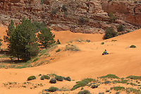 738900010 an atv rider cruises among the dunes and fir trees in coral pink sand dunes state park utah
