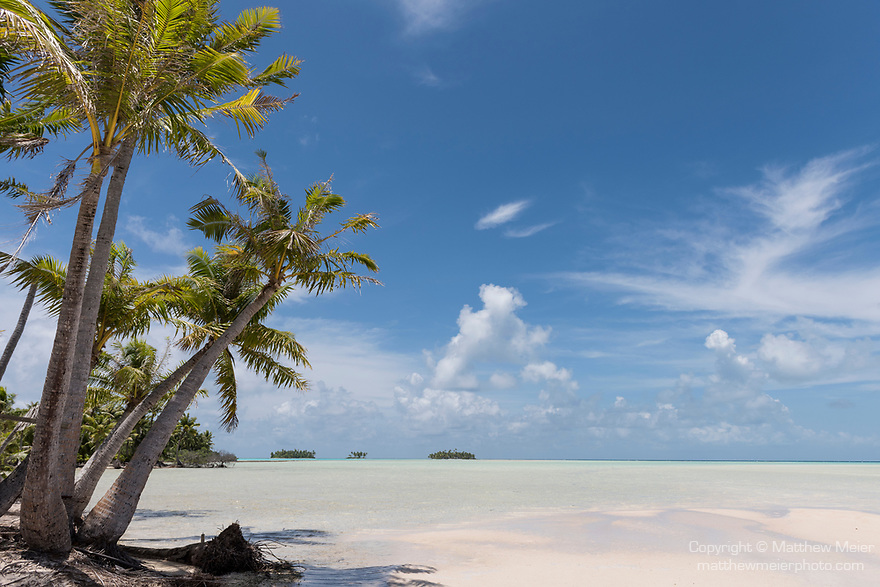 Blue Lagoon, Rangiroa Atoll, Tuamotu Archipelago, French Polynesia; palm trees along the shore of the blue lagoon