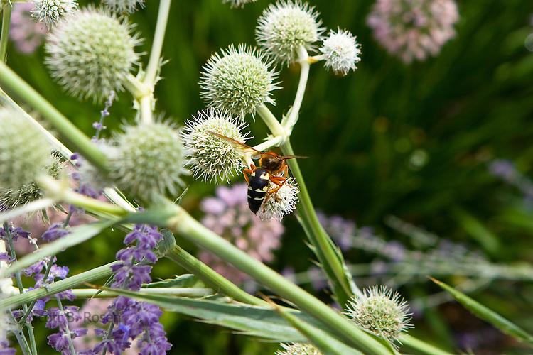 Close-up bee pollenating flowers in Chicago's Millenium Park