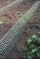 Keeping critters away from garden plants with protective structure, preventing animals such as rabbits, dogs, raccoons, deer, from destroying vegetables and fruits