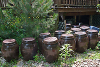 Soy Sauce in Ginger Jars made from backyard soybeans