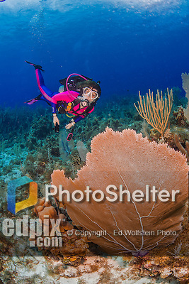 25 July 2015: SCUBA Diver Sally Herschorn explores the formations of sea fans at Lemon Reef, on the North side of Grand Cayman Island. Located in the British West Indies in the Caribbean, the Cayman Islands are renowned for excellent scuba diving, snorkeling, beaches and banking.  Mandatory Credit: Ed Wolfstein Photo *** RAW (NEF) Image File Available ***