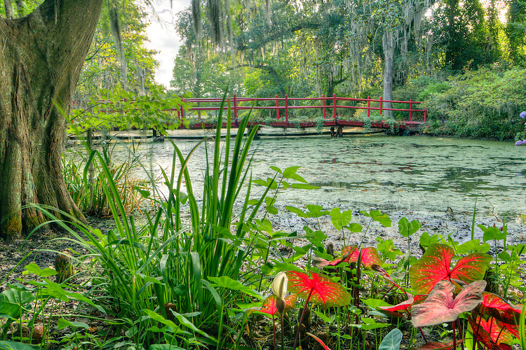 Magnolia Plantation Gardens and Cypress Swamp Charleston South Carolina