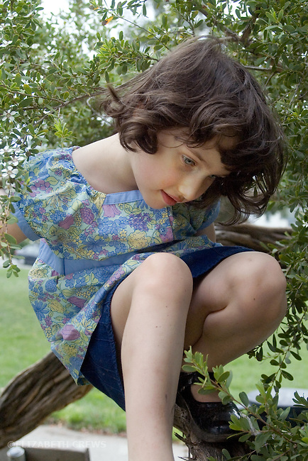 Albany CA Girl, four-years-old contemplating next move while climbing a tree  MR