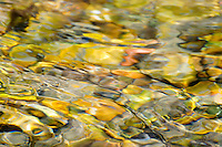 &quot;RIVER AGATE&quot;<br />